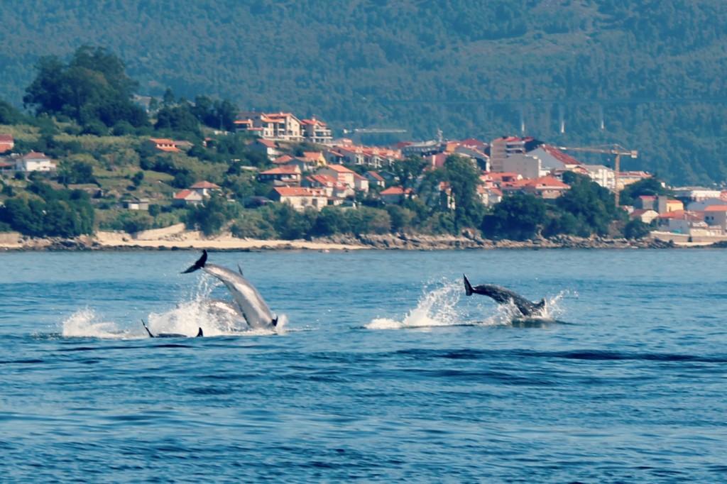 delfines-en-la-ria-de-vigo.-Paseos-en-velero